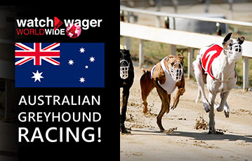 Watch and Wager sport greyhound us